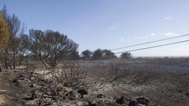Zona calcinada por el incendio forestal acaecido en el norte de Menorca