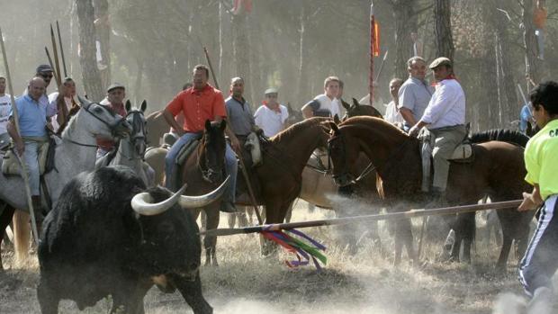 Celebración del torneo medieval de El Toro de la Vega, en Tordesillas (Valladolid)