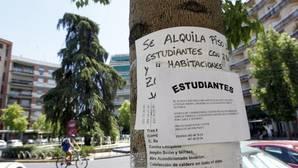 La suciedad y el ruido son para los estudiantes españoles los mayores problemas para convivir