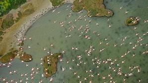 Doñana, en peligro