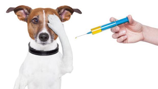 Mascotas: «Truco o trato»