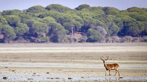 Estas son las cuatro graves amenazas que han puesto a Doñana en peligro