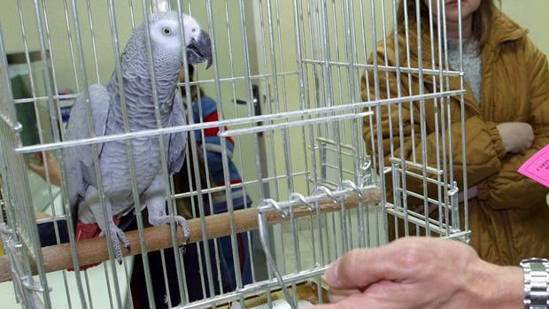 El Parlamento Europeo pide que se delimiten los animales exóticos que se pueden tener como mascotas