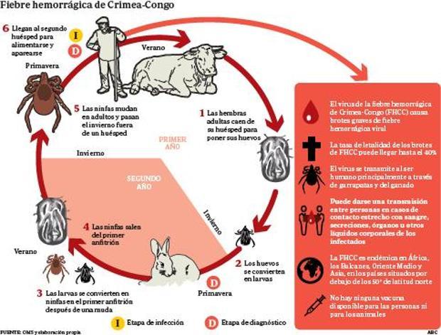 Así es el ciclo del virus
