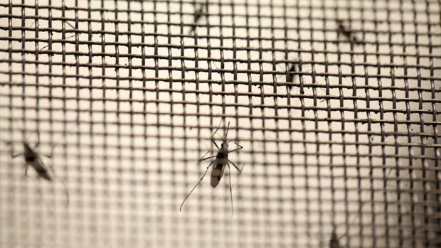 El Ministerio de Sanidad, Servicios Sociales e Igualdad ha elevado a 283 el número de casos de infección por Zika confirmados en España
