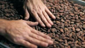 El cacao natural protege contra el cáncer y las enfermedades del corazón