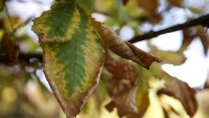 El otoño será más cálido y normal en lluvias