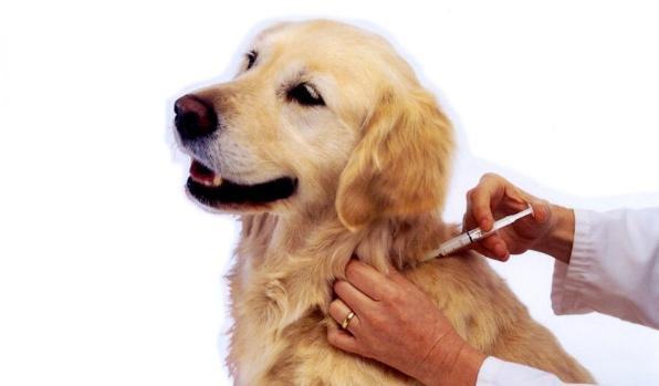 Mascotas: la leishmaniosis, un enemigo silencioso