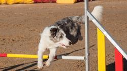 Un perro salta la valla