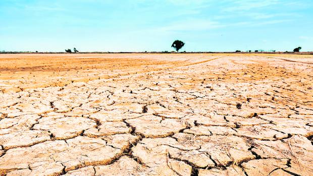 La sequía arrecia en zonas de las cuencas del Júcar y el Segura. El Gobierno ha prorrogado este viernes la declaración de sequía en la zona hasta 2017