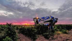 El viñedo español le planta cara al cambio climático con tecnología puntera y variedades autóctonas