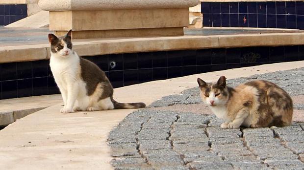 Dar de comr a los gatos callejeros en Sa Pobla puede salir muy caro