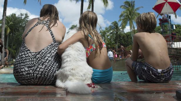 El Congreso acuerda rebajar el IVA de los servicios veterinarios del 21 al 10%