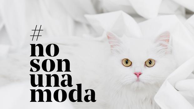 Campaña de la Fundación Affinity para concienciar sobre la importancia de tener claro por qué se quiere una mascota