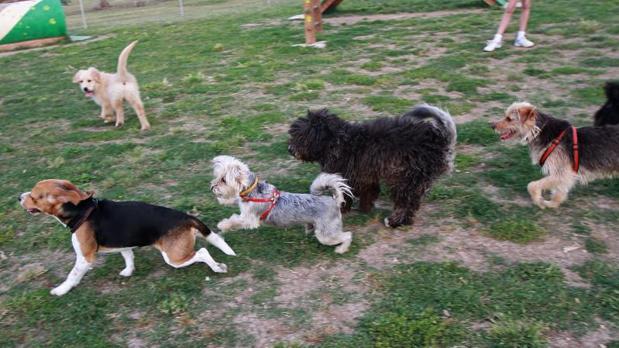 Condenada a pagar 1.500 euros a un vecino al que sus perros no dejaban dormir