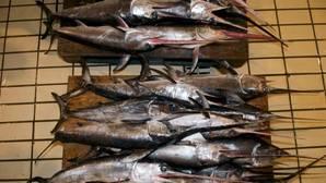 Las poblaciones de pez espada en el Mediterráneo se reducen en un 70% por la sobrepesca