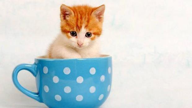 Enfermedad respiratoria felina: gatitos huérfanos de otoño