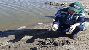 ¿Por qué desaparecen las ranas en el lago más famoso de Sudamérica?