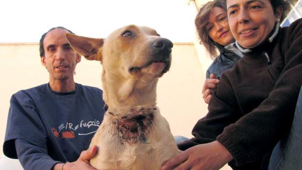 El maltrato animal está castigado con penas de cárcel