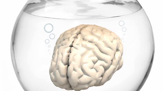 El alcohol, enemigo del cerebro