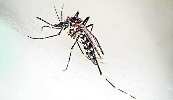 El zika ya no es una amenaza global