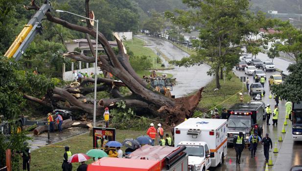 Obreros trabajan en retirar un árbol que cayó sobre un vehículo a causa de la tormenta tropical Otto este martes en Ciudad Panamá