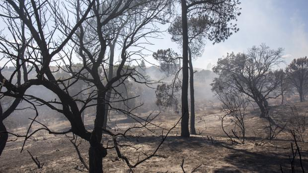 Imagen de una de las zonas afectadas por el fuego