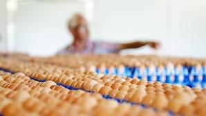 Vista de la producción de huevos de una granja en Putten