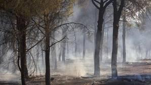 El incendio fue declarado en la tarde de este jueves