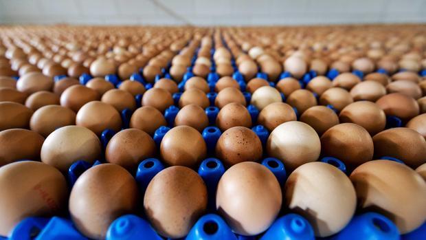 Vista de la producción de huevos de una granja en Putten (Holanda)