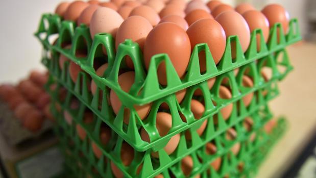El País Vasco inmoviliza 20.000 unidades de huevo líquido contaminado con fipronil