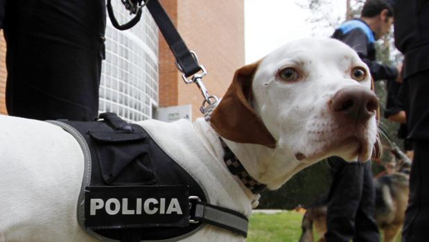 La importancia de los perros es cada vez mayor en operaciones policiales