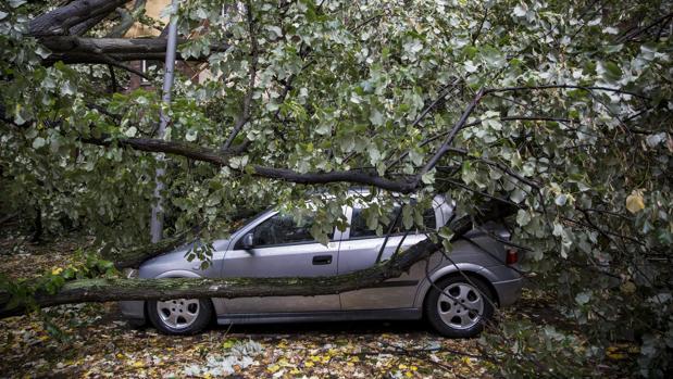 Un árbol caído sobre un vehículo en una calle de Berlín, Alemania