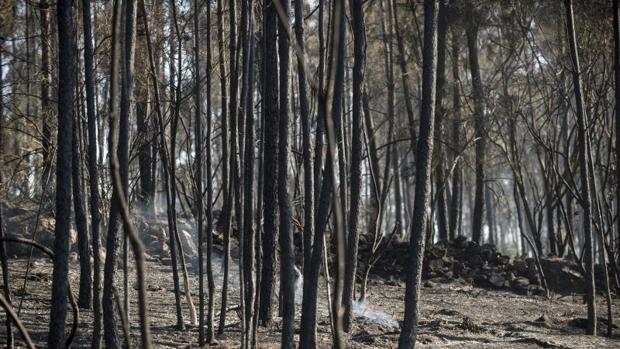 Un incendio forestal registrado este fin de semana en la localidad orensana de O Carballiño (Ourense)