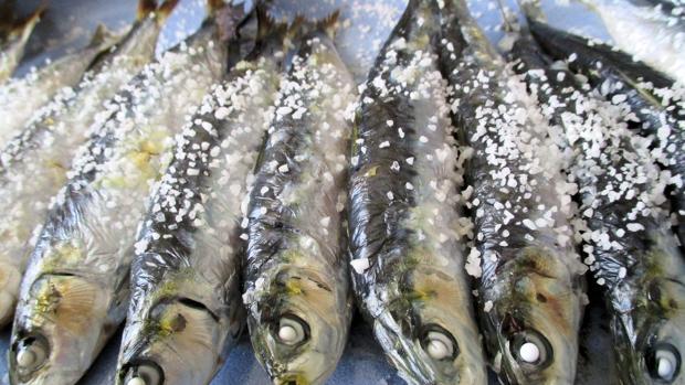 Este año Portugal quiere pescar hasta 4.760 toneladas