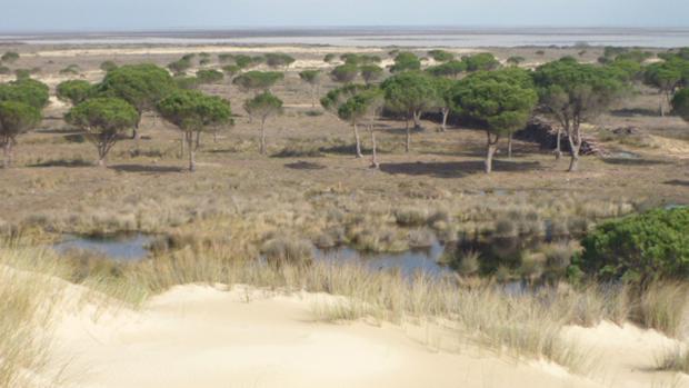 Los acuíferos de Doñana pueden estar en peligro con estos proyectos de almacenamiento de gas