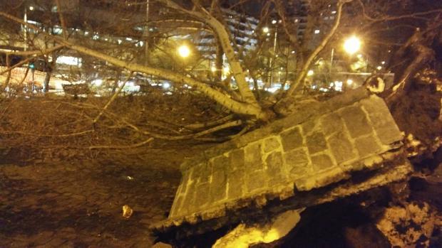Uno de los dos peatones heridos, un joven de 27 años, ha tenido que ser rescatado por los bomberos de debajo del árbol