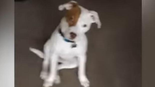 Ivor, el perro sordo que ha aprendido la lengua de signos, en una imagen de YouTube