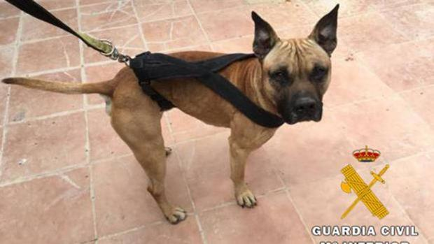 Imagen de archivo de un perro rescatado por la Guardia Civil