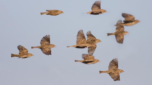 Aves en migración