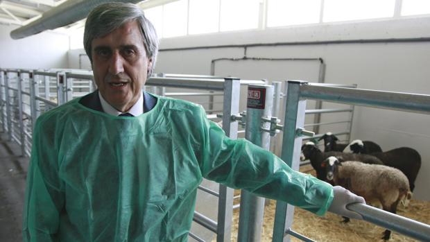 «Vacas locas»: la temida enfermedad a la que Europa no da tregua