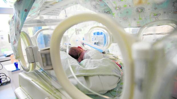 Los últimos días de diciembre de 2010 se produjeron 2.000 nacimientos, el 6% de todos los nacimientos de enero