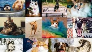 Las mascotas influyen en el comportamiento de los usuarios en Facebook