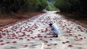 La fascinante isla que es invadida por cangrejos cada año