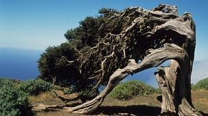 Los árboles más viejos y bellos de España
