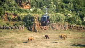 Una telecabina única: cómo ver Cabárceno desde el aire