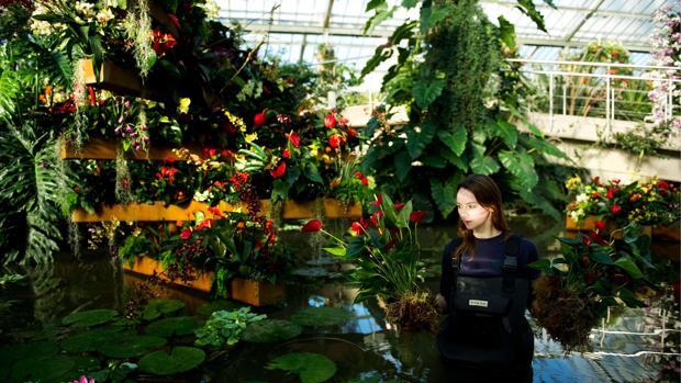 Una horticultora sostiene varias plantas en el interior de uno de los invernaderos de Kew Garden