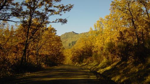 Planes de otoño para el Puente del Pilar