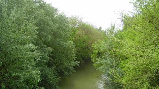 Corredor Verde de Guadiamar. Fuente: andalucia.org