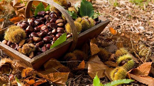 Disfruta el sabor a otoño con las fiestas de la castaña